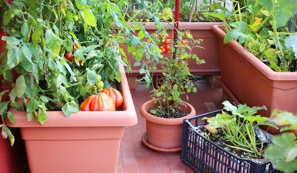 Best Herbs To Grow In A Home Garden