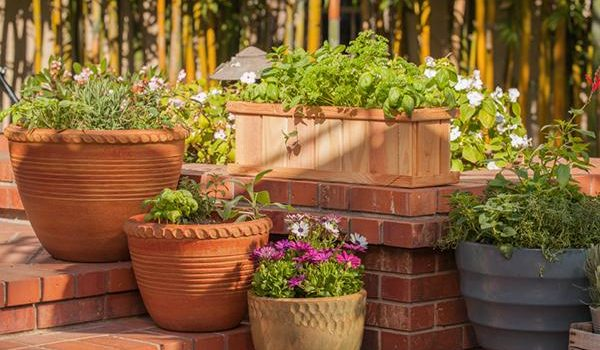 Tips To Take Care Of Your Home Garden